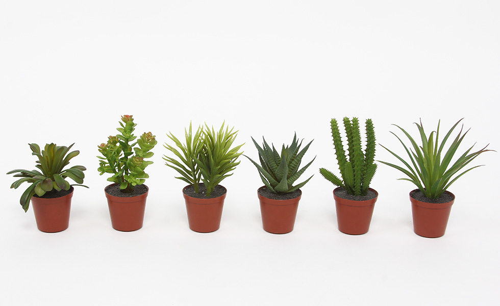 Sztuczne Sukulenty W Doniczce 12 Cm Kaktusy Kaktus