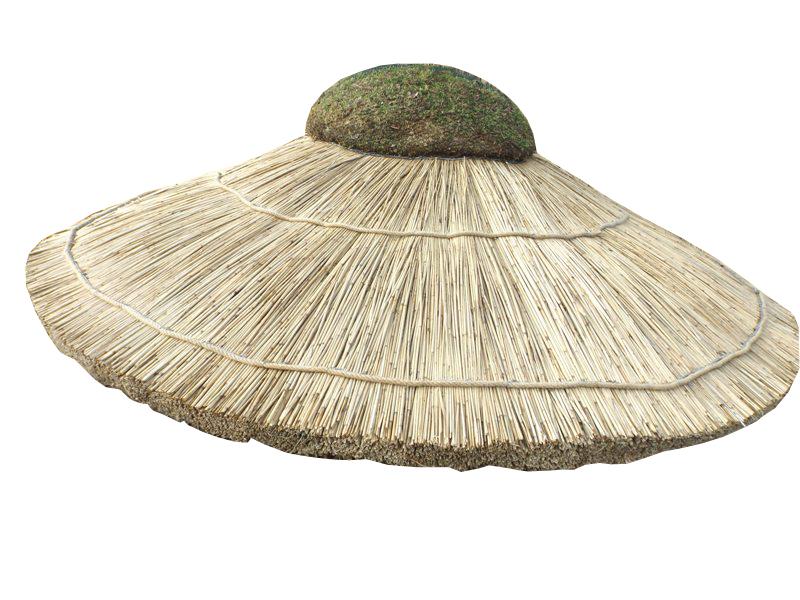 Slnečníkom, cukrovej trstiny, Havajská, pláže