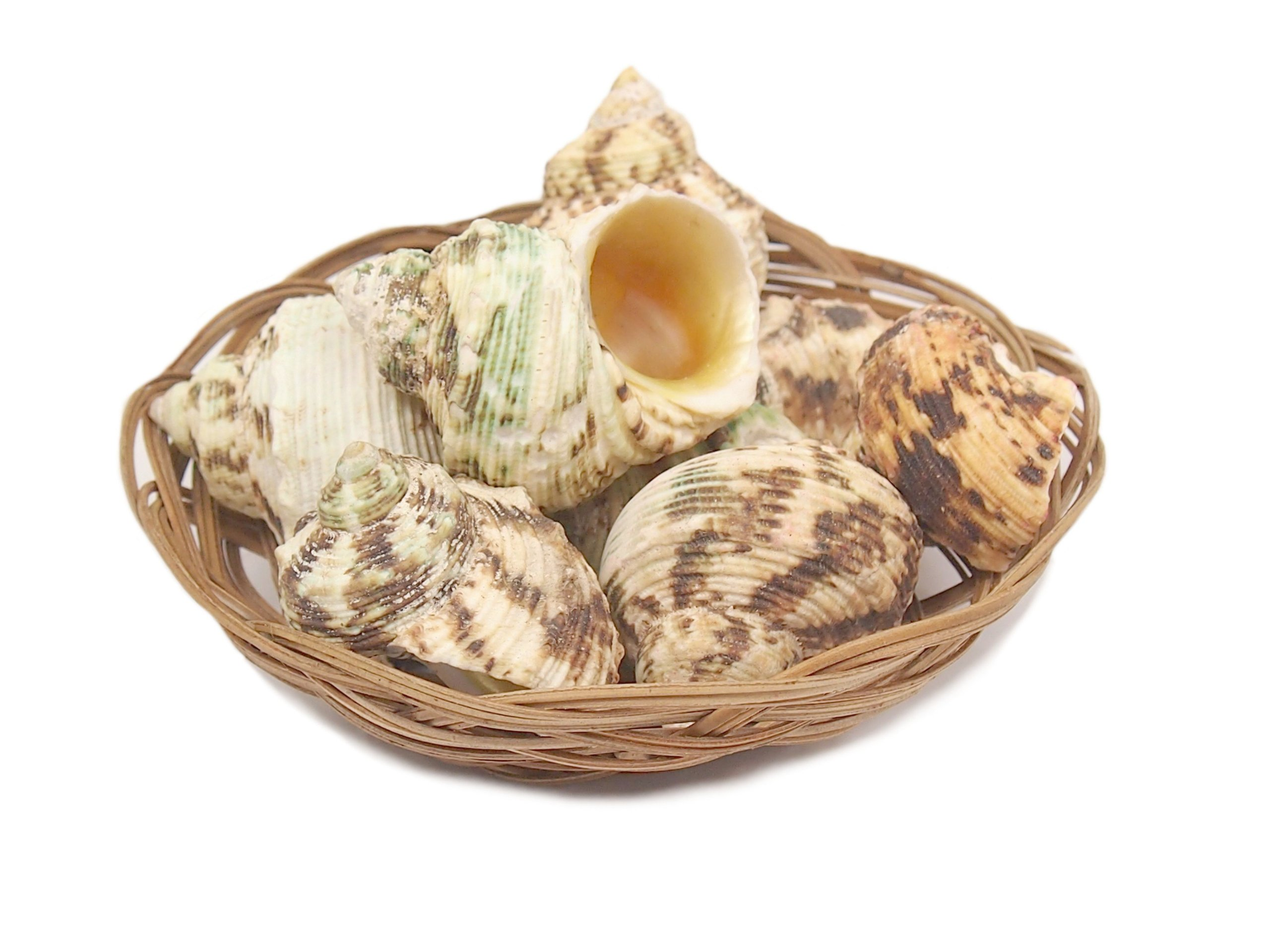 Seašell Sea Shells Green Turban 250g 10 ks