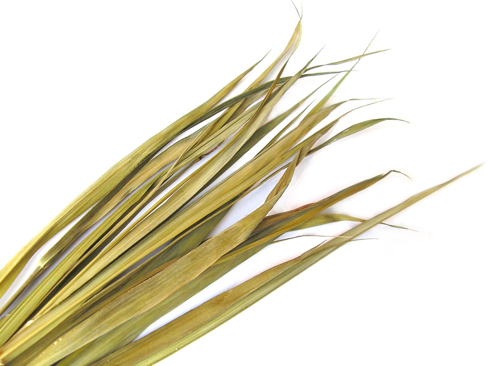 ŻUBRÓWKA trawa żubrowa turówka 5 g