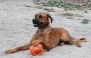 PIŁKA dużego psa KONG Jumbler 14cm APORT Rodzaj piłki