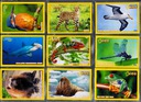 National Geographic KIDS TRADING CARDS 63 szt.