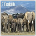 BrownTrout Publishers Elephants 2017 Square Wall C