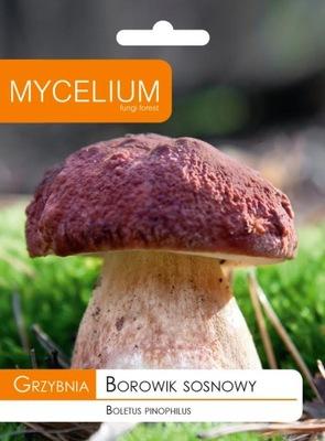 МИЦЕЛИЙ белый ГРИБ СОСНОВЫЙ, белый гриб Грибы лесные