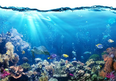 FOTOTAPETY 3D NA WYMIAR AKWARIUM podwodny świat !!