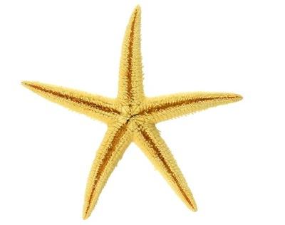 Морская звезда натуральная большой 8 -10см морские звезды