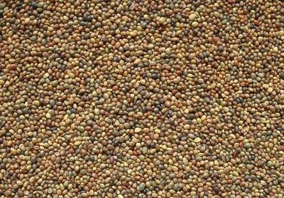Perzský lucerna, lúky, pasienky, med, 10 kg