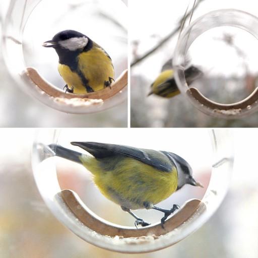 Wiszące karmniki dla ptaków TWEET RESTO BAR. TUBE